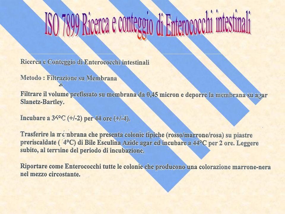 ISO 7899 Ricerca e conteggio di Enterococchi intestinali