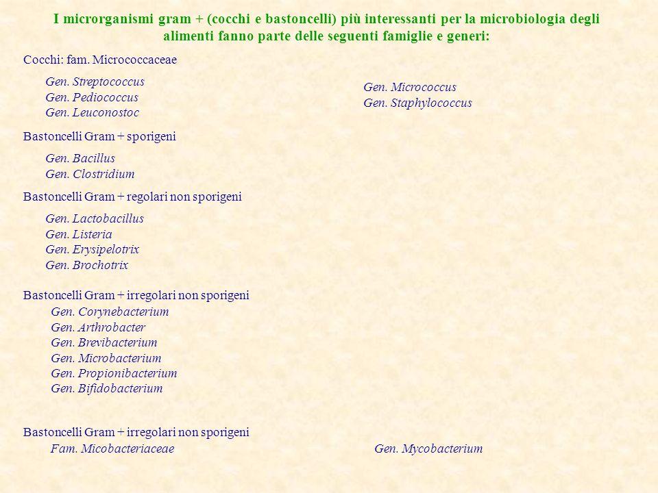 I microrganismi gram + (cocchi e bastoncelli) più interessanti per la microbiologia degli alimenti fanno parte delle seguenti famiglie e generi: