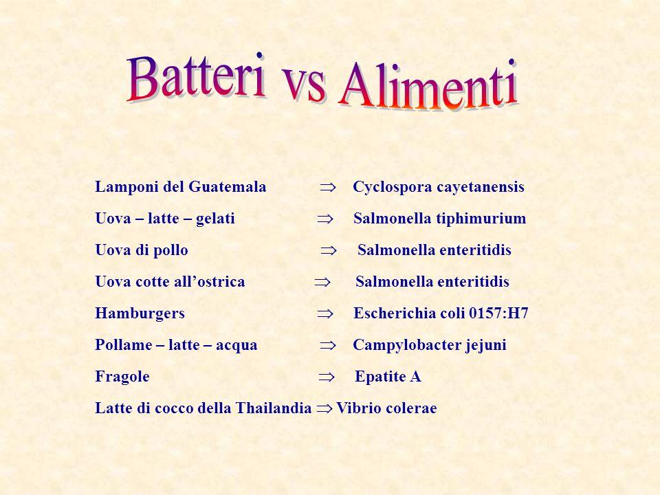 Batteri vs Alimenti Lamponi del Guatemala  Cyclospora cayetanensis