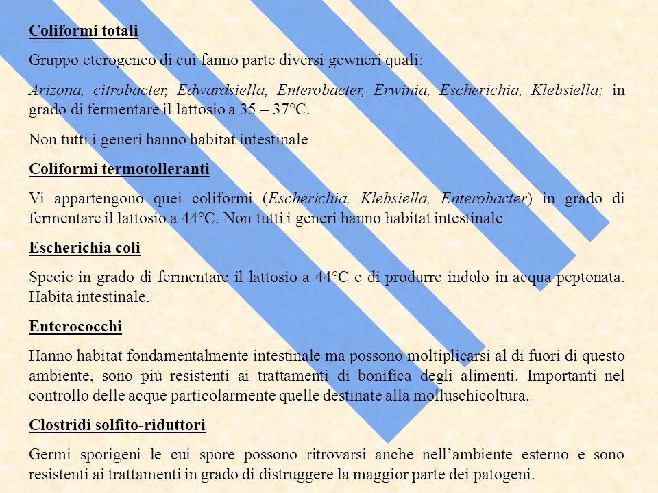 Coliformi totali Gruppo eterogeneo di cui fanno parte diversi gewneri quali: