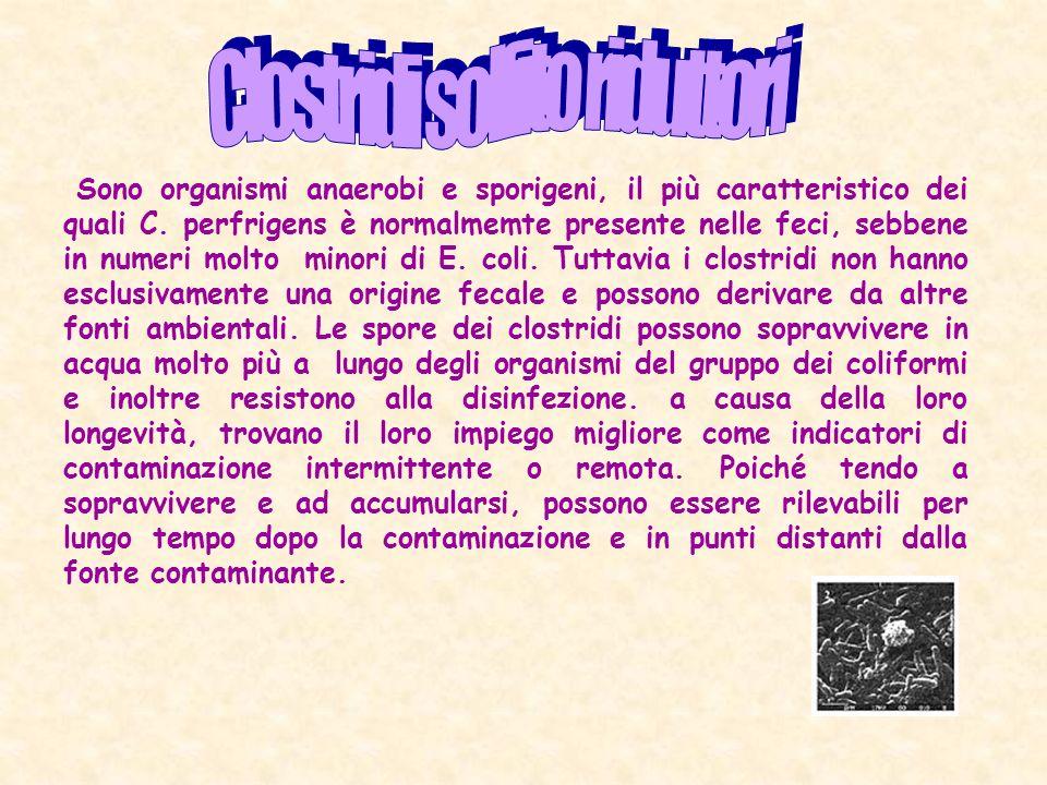 Clostridi solfito riduttori
