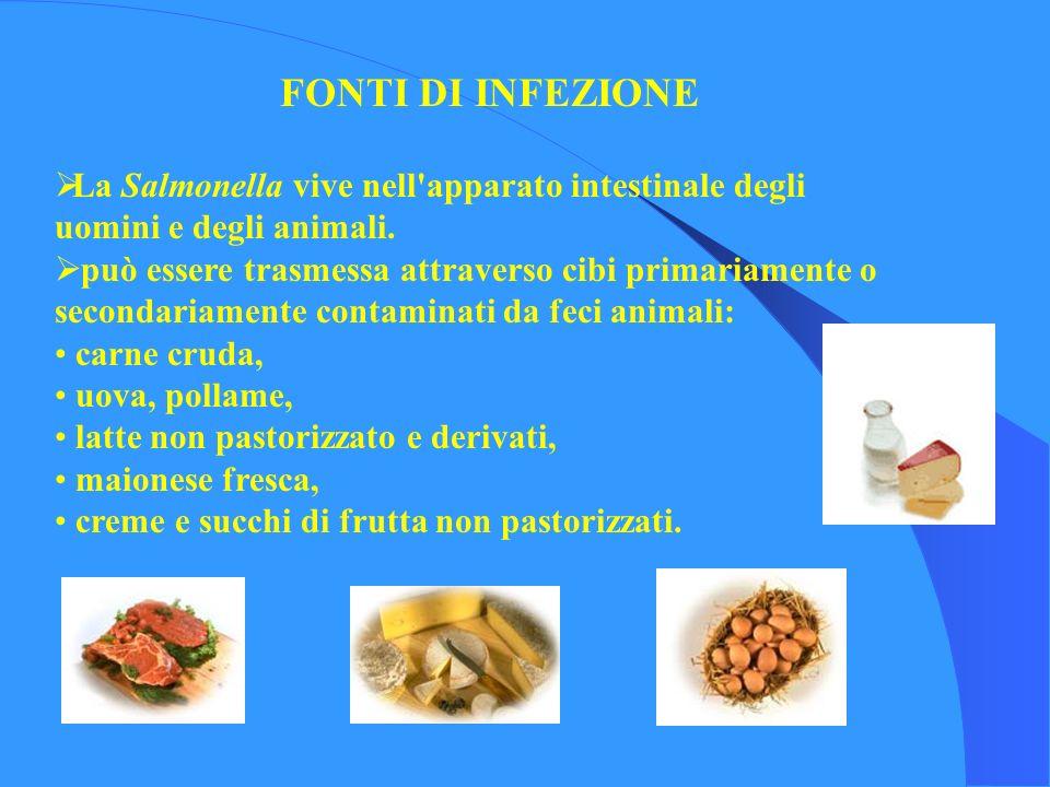 FONTI DI INFEZIONE La Salmonella vive nell apparato intestinale degli uomini e degli animali.