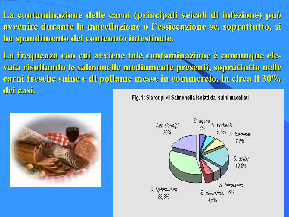 La contaminazione delle carni (principali veicoli di infezione) può avvenire durante la macellazione o l'essiccazione se, soprattutto, si ha spandimento del contenuto intestinale.