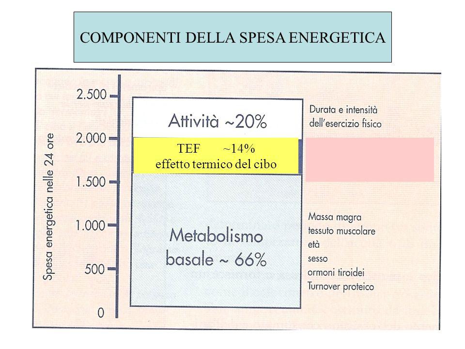 COMPONENTI DELLA SPESA ENERGETICA