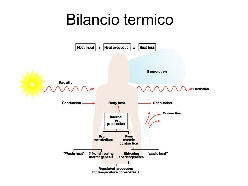Bilancio termico Il bilancio termico dell'organismo dipende dall'equilibrio dinamico tra le entrate e le uscite di calore.