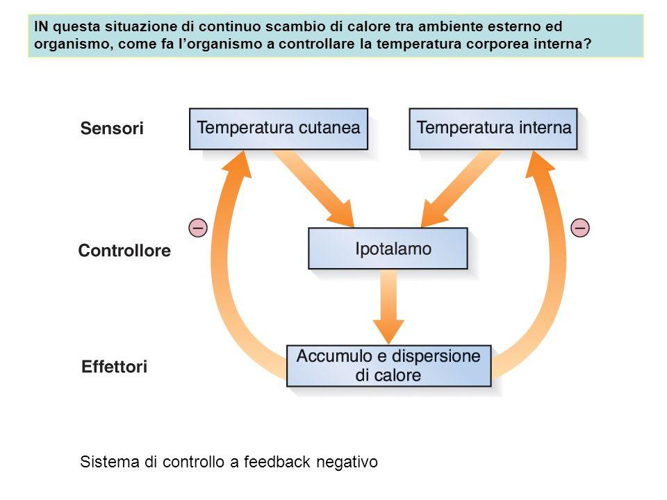 Sistema di controllo a feedback negativo