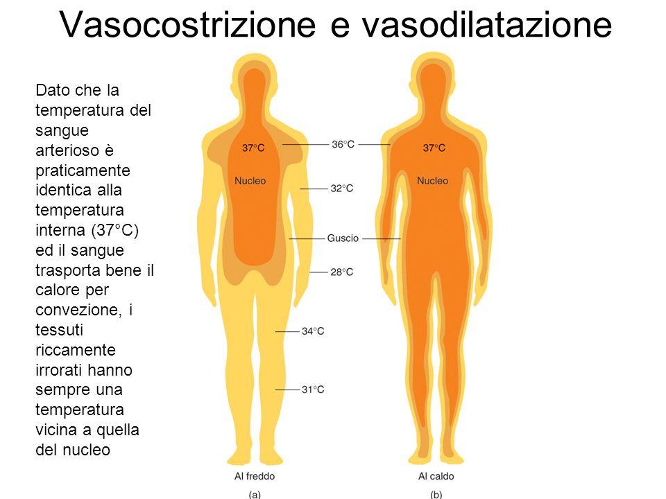 Vasocostrizione e vasodilatazione