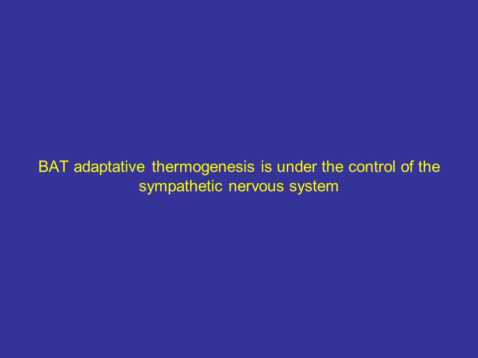BAT adaptative thermogenesis is under the control of the sympathetic nervous system