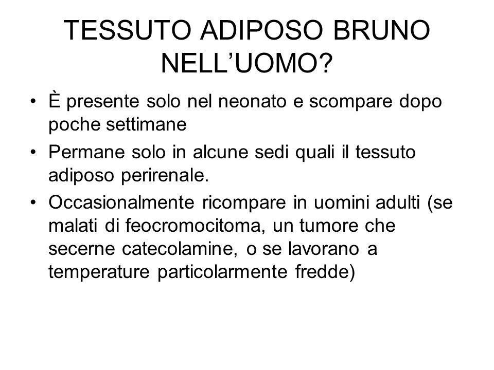 TESSUTO ADIPOSO BRUNO NELL'UOMO