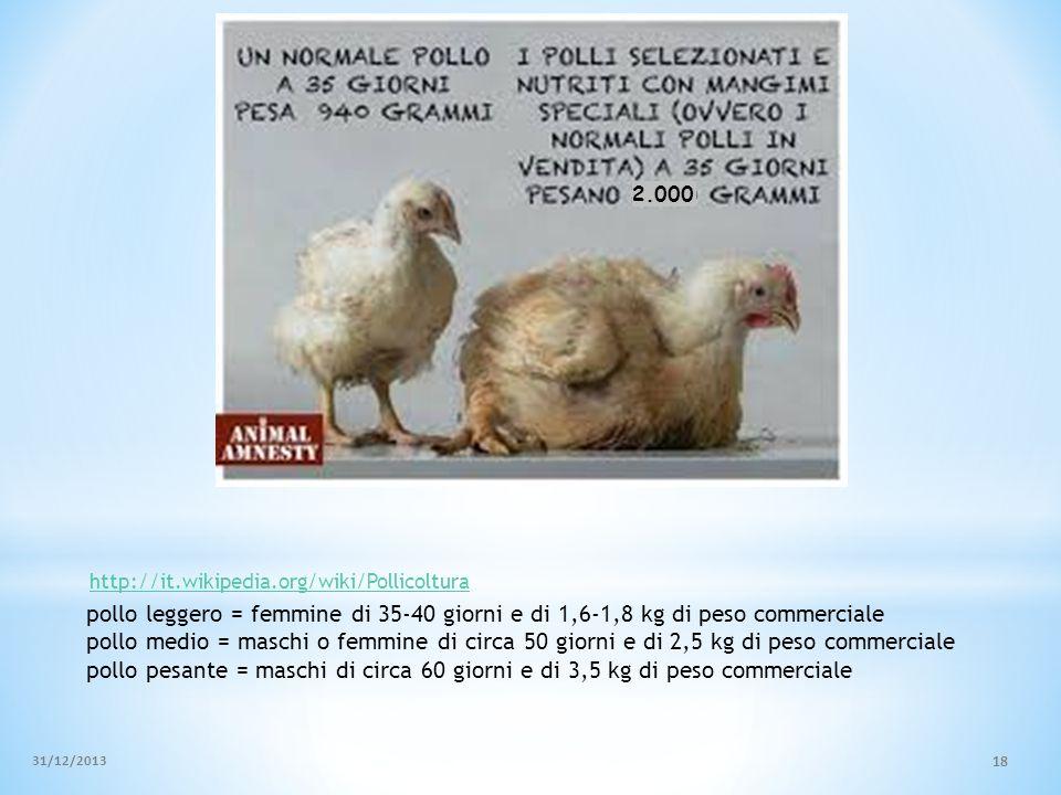 2.000 http://it.wikipedia.org/wiki/Pollicoltura. pollo leggero = femmine di 35-40 giorni e di 1,6-1,8 kg di peso commerciale.