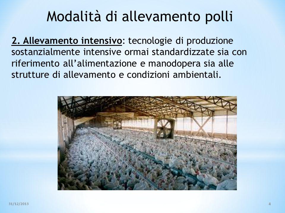 Modalità di allevamento polli