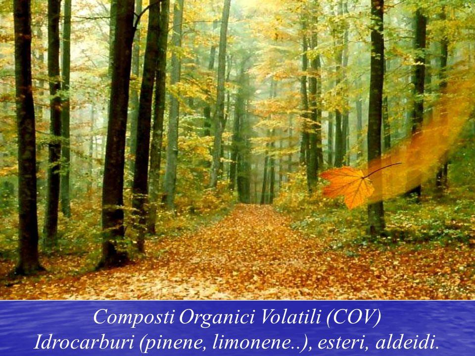 Composti Organici Volatili (COV)