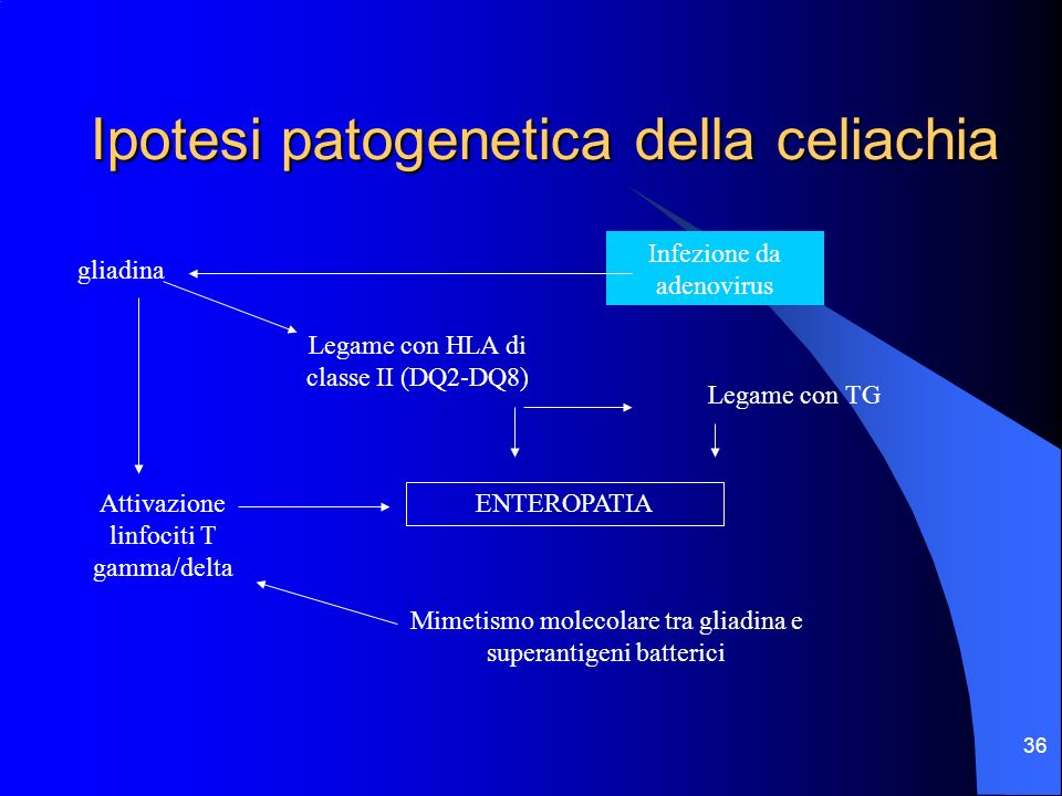 Ipotesi patogenetica della celiachia