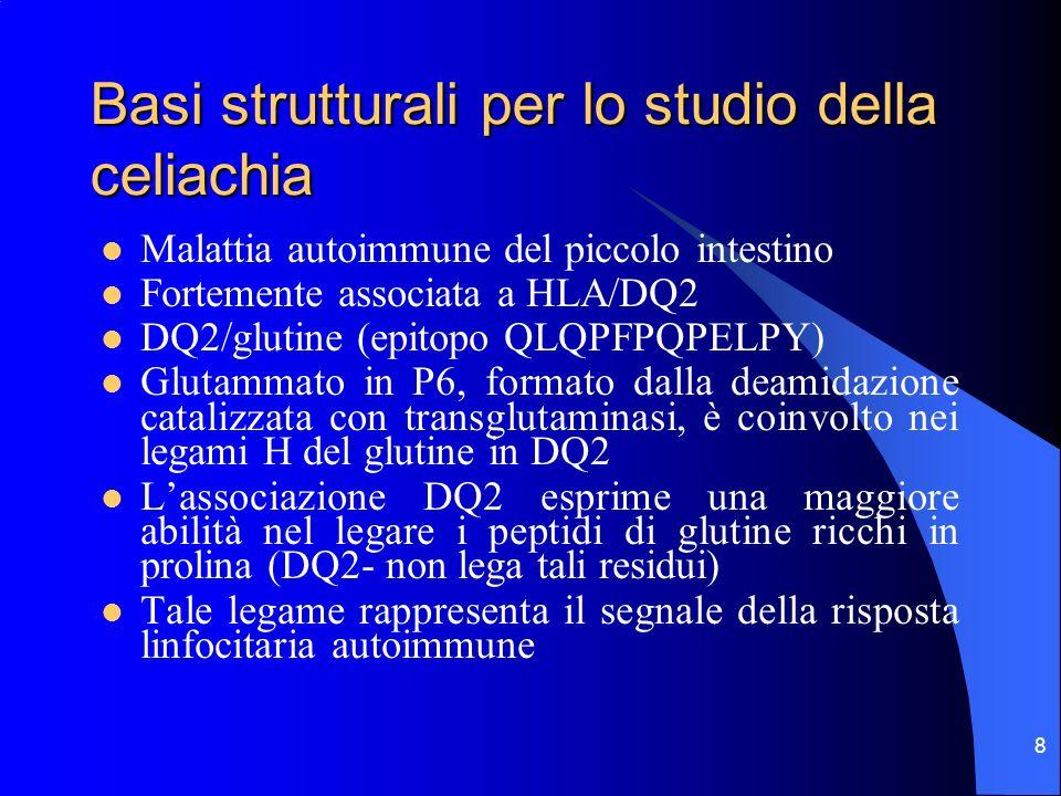 Basi strutturali per lo studio della celiachia