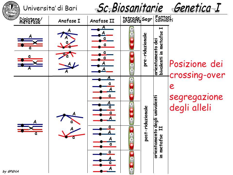 Posizione dei crossing-over e segregazione degli alleli