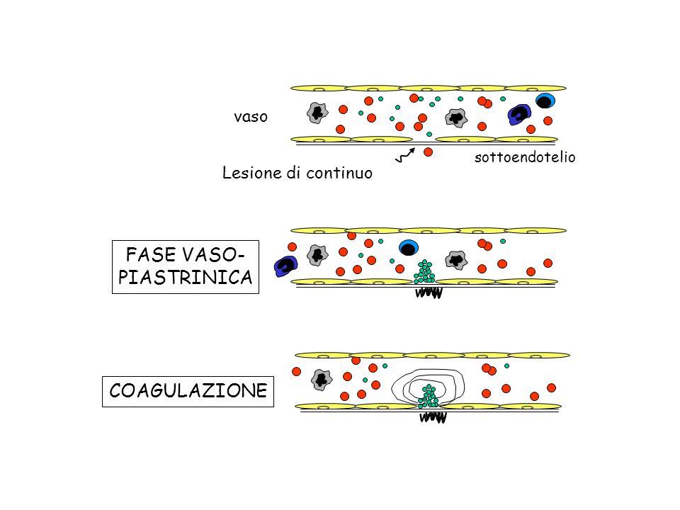 FASE VASO- PIASTRINICA COAGULAZIONE vaso Lesione di continuo