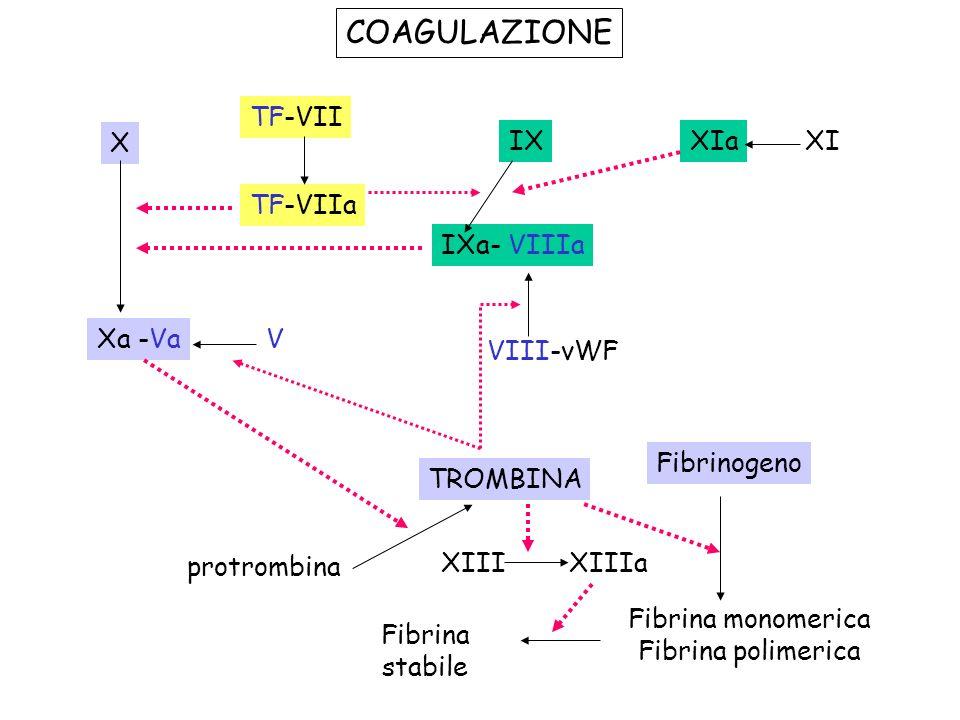COAGULAZIONE TF-VII X IX XIa XI TF-VIIa IXa- VIIIa Xa -Va V VIII-vWF