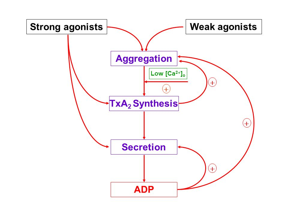 Strong agonists Weak agonists Aggregation TxA2 Synthesis Secretion ADP