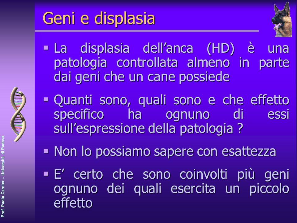 Geni e displasia La displasia dell'anca (HD) è una patologia controllata almeno in parte dai geni che un cane possiede.
