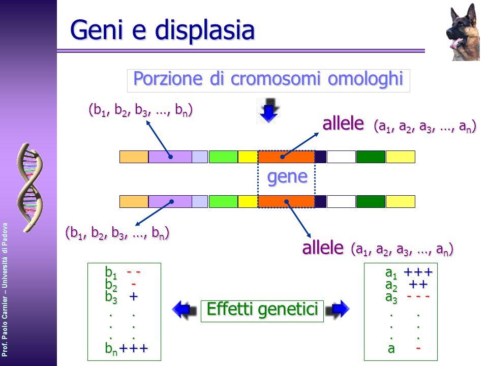 Porzione di cromosomi omologhi
