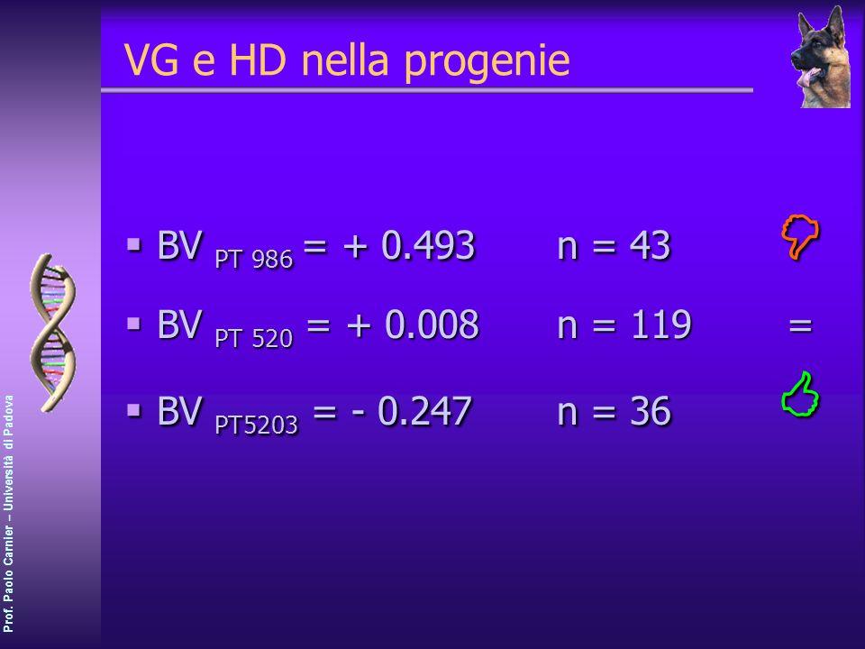 VG e HD nella progenie BV PT 986 = + 0.493 n = 43 