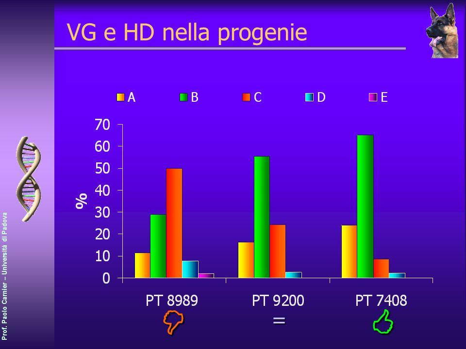 VG e HD nella progenie  = 