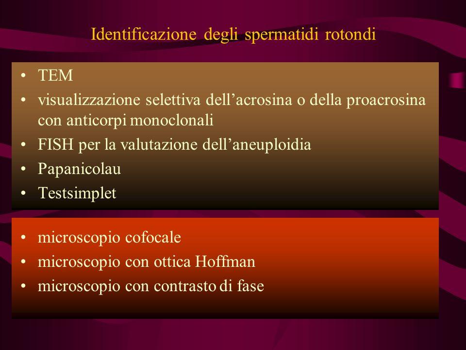 Identificazione degli spermatidi rotondi