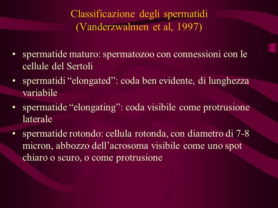 Classificazione degli spermatidi (Vanderzwalmen et al, 1997)