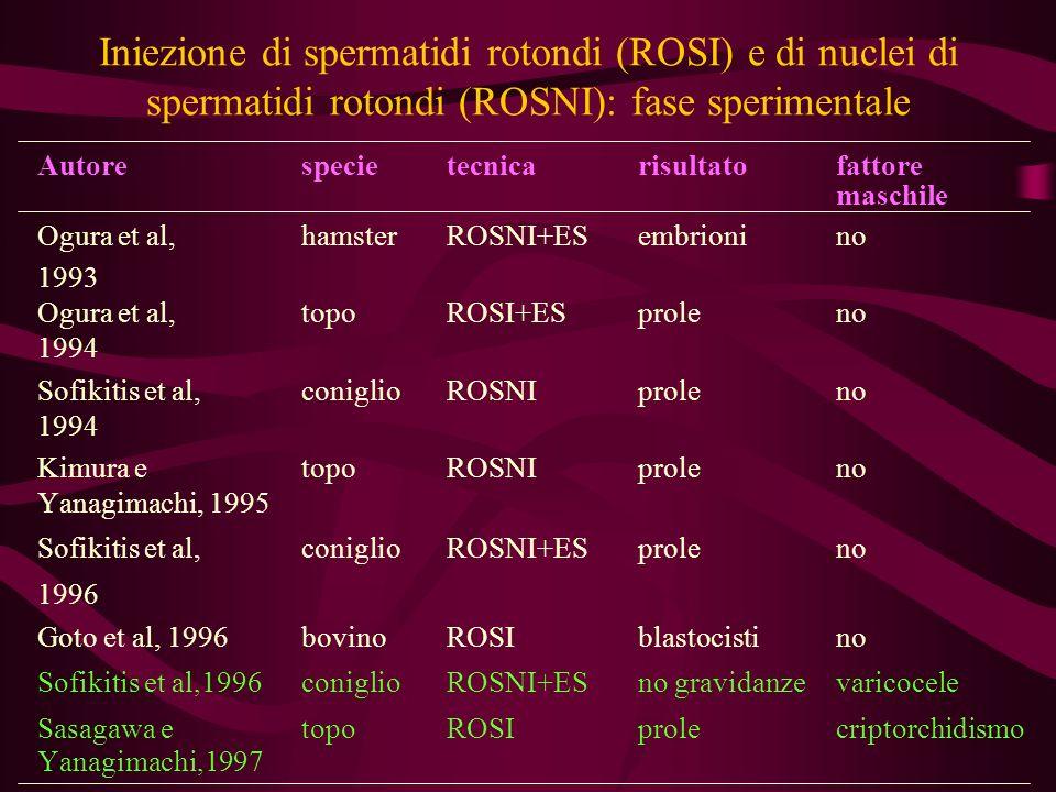 Iniezione di spermatidi rotondi (ROSI) e di nuclei di spermatidi rotondi (ROSNI): fase sperimentale