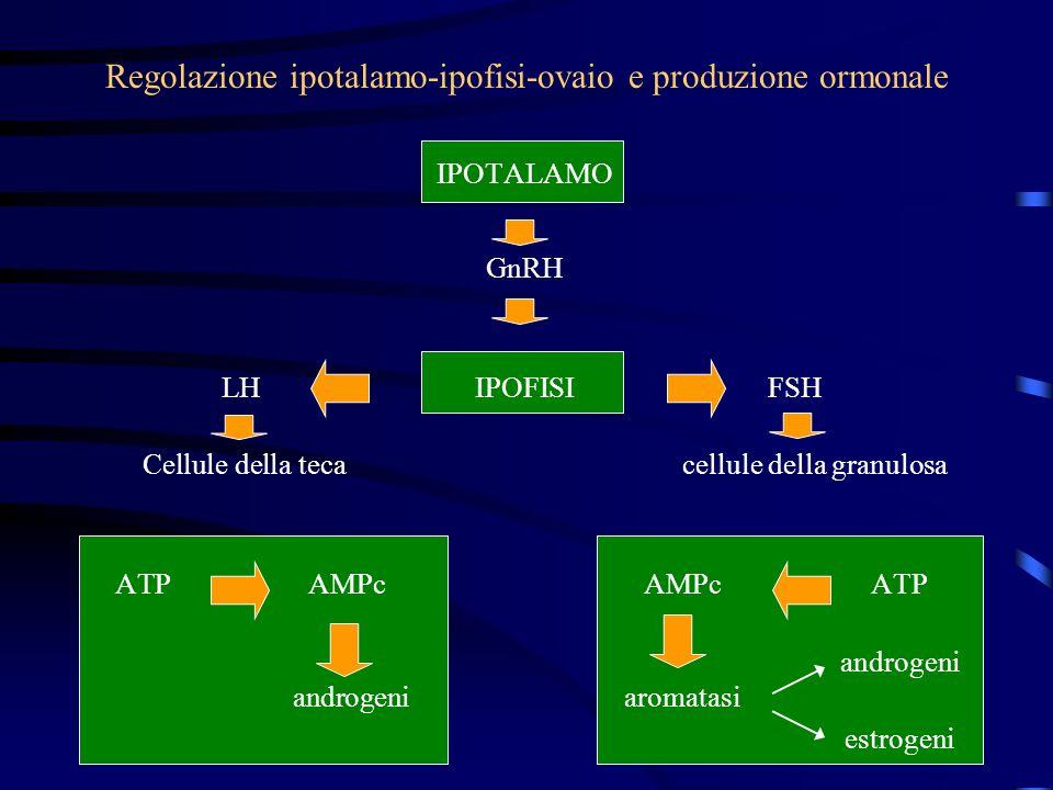 Regolazione ipotalamo-ipofisi-ovaio e produzione ormonale