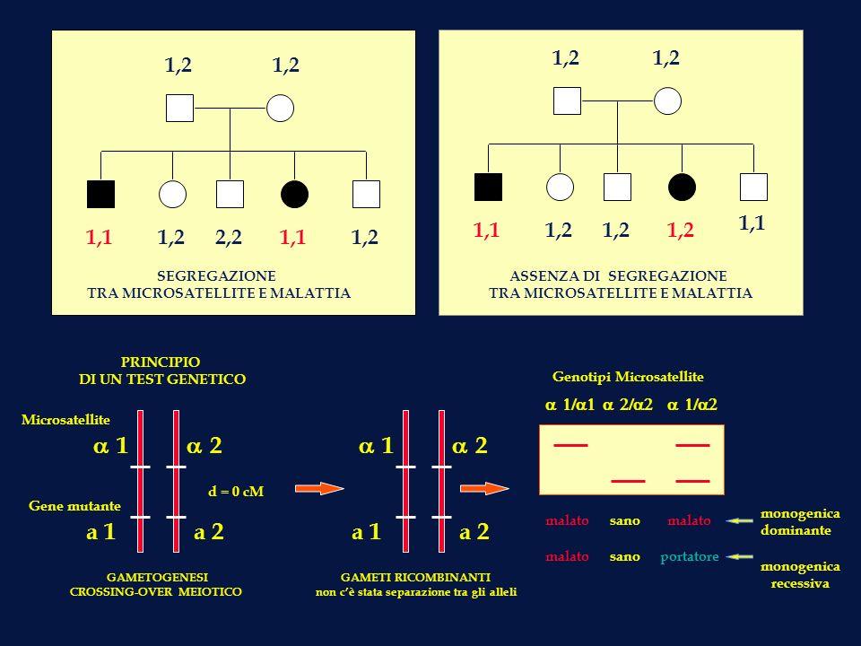 1,2 1,2. 1,2. 1,2. 1,1. 1,1. 1,2. 1,2. 1,2. 1,1. 1,2. 2,2. 1,1. 1,2. SEGREGAZIONE. TRA MICROSATELLITE E MALATTIA.