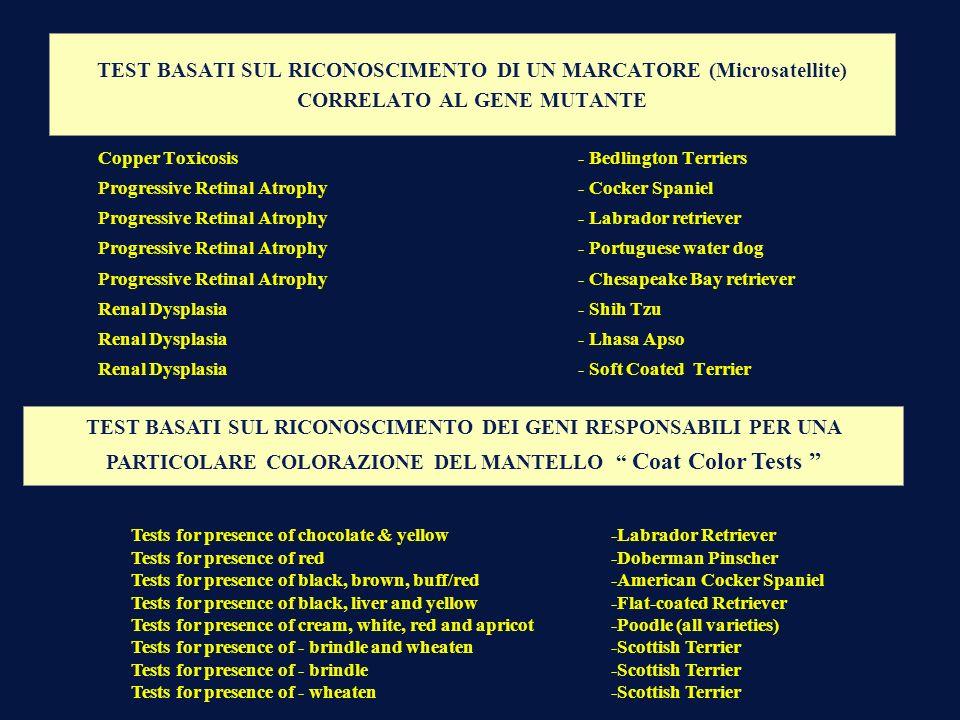 TEST BASATI SUL RICONOSCIMENTO DI UN MARCATORE (Microsatellite) CORRELATO AL GENE MUTANTE
