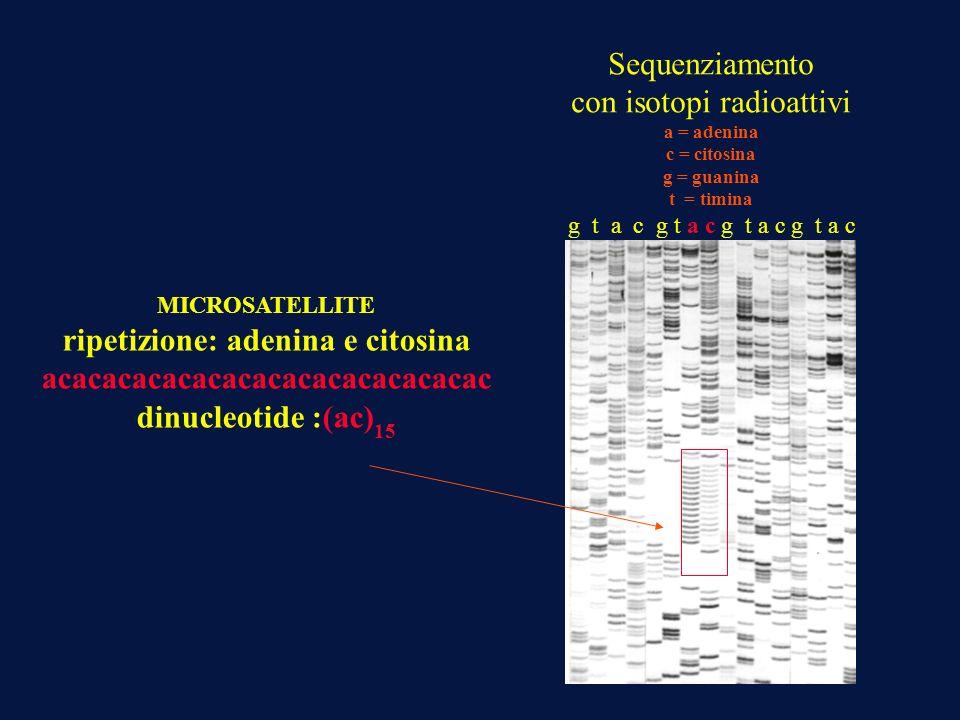 ripetizione: adenina e citosina acacacacacacacacacacacacacacac