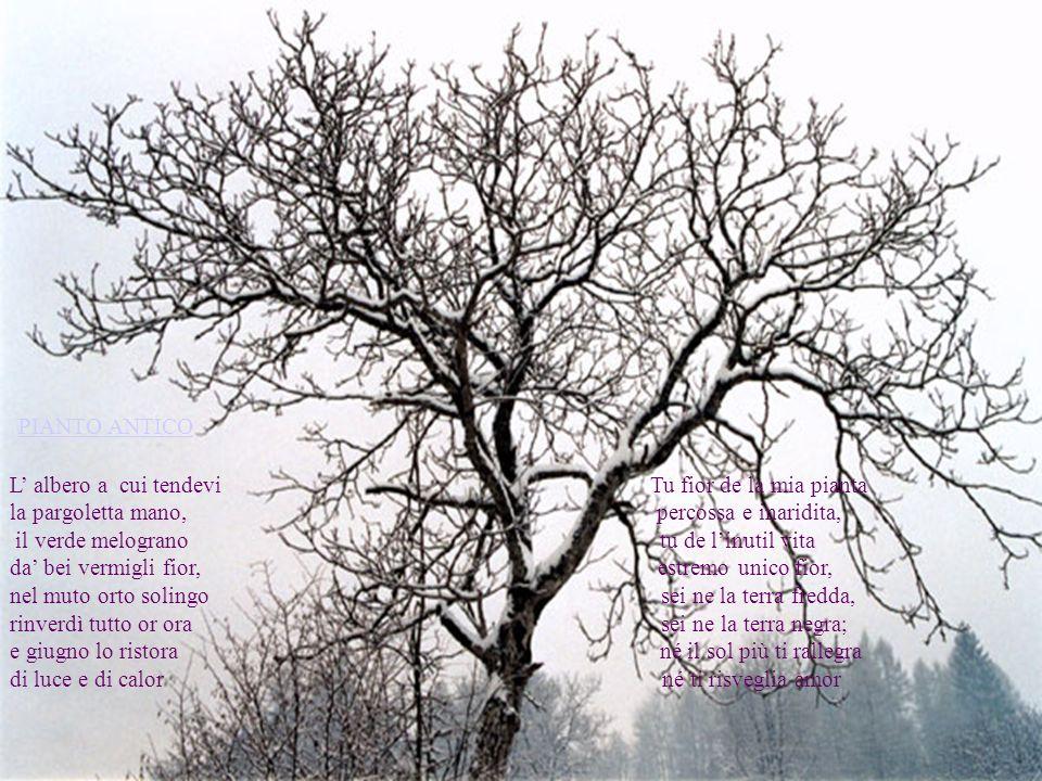 PIANTO ANTICO L' albero a cui tendevi Tu fior de la mia pianta