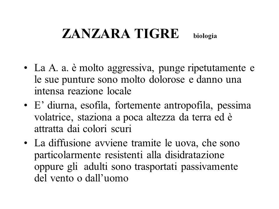 ZANZARA TIGRE biologia