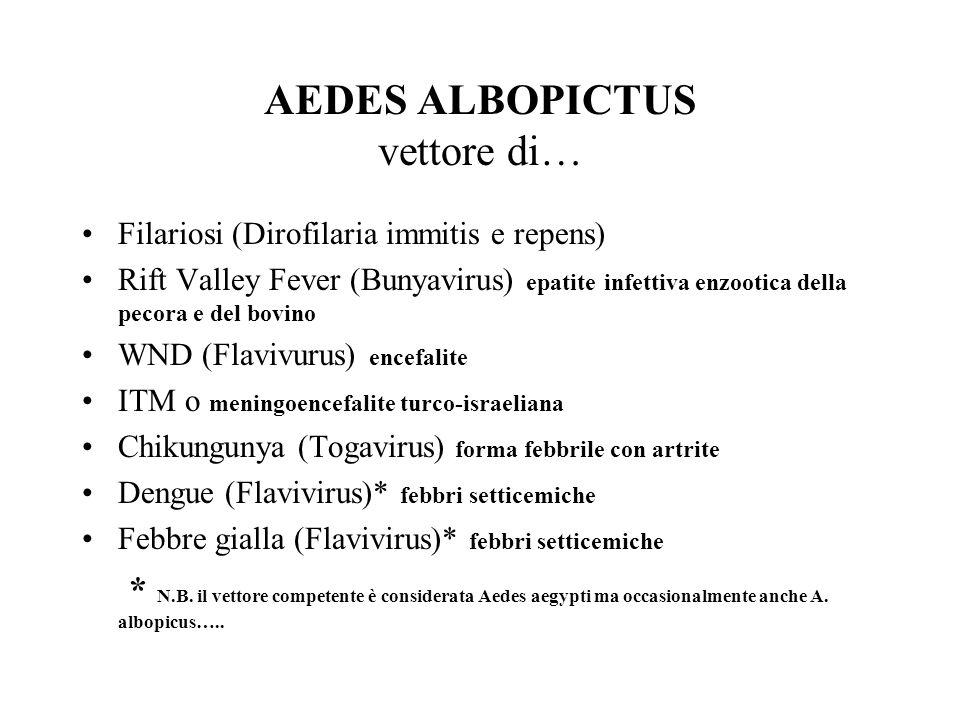 AEDES ALBOPICTUS vettore di…