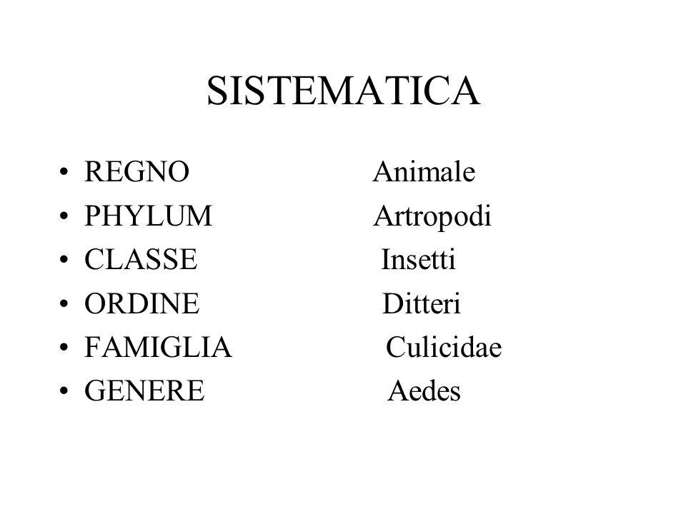 SISTEMATICA REGNO Animale PHYLUM Artropodi CLASSE Insetti