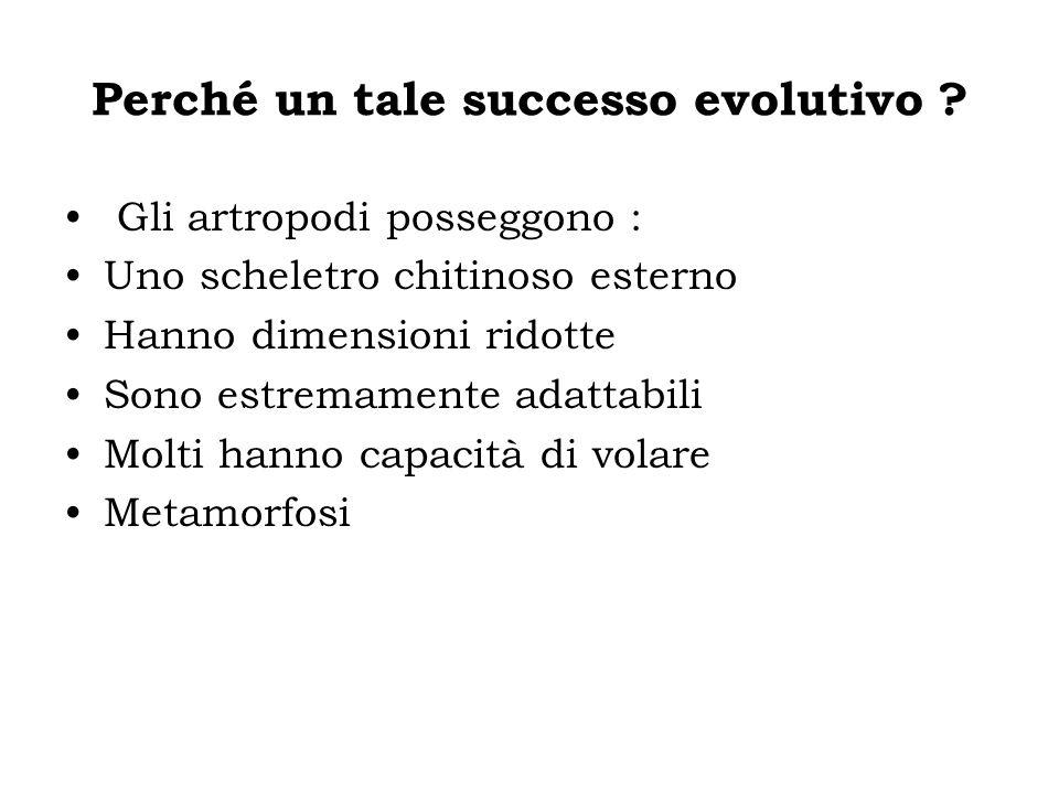 Perché un tale successo evolutivo