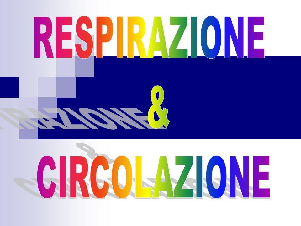 RESPIRAZIONE & CIRCOLAZIONE