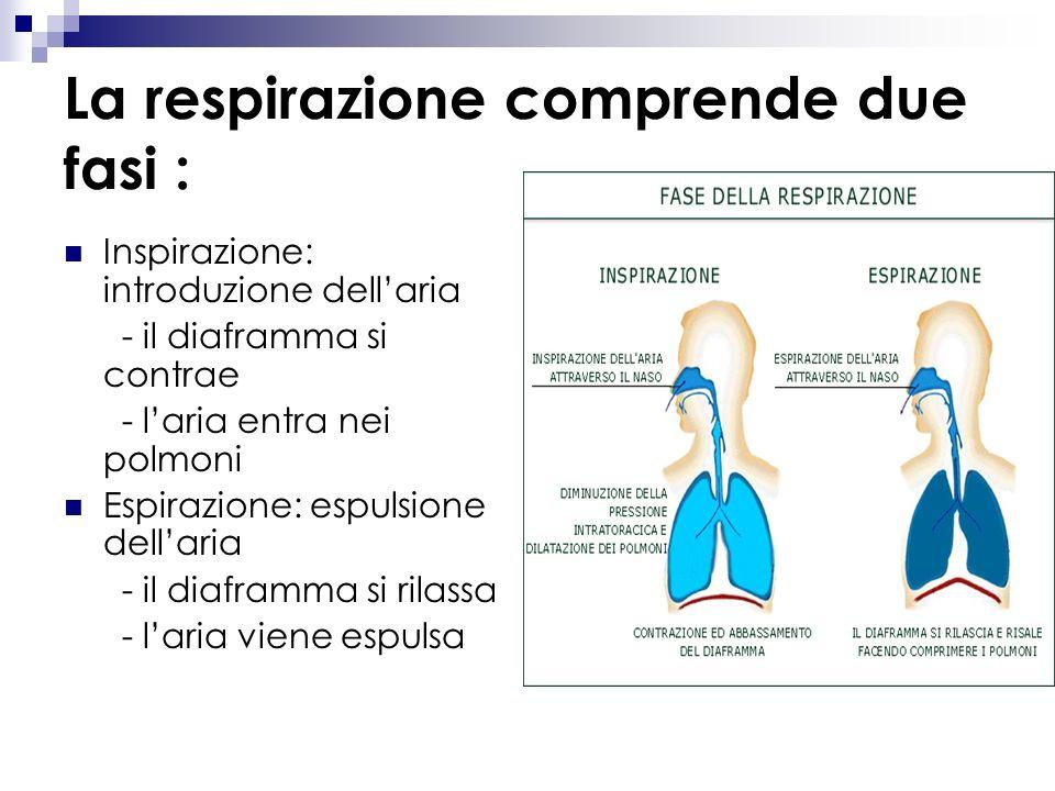 La respirazione comprende due fasi :
