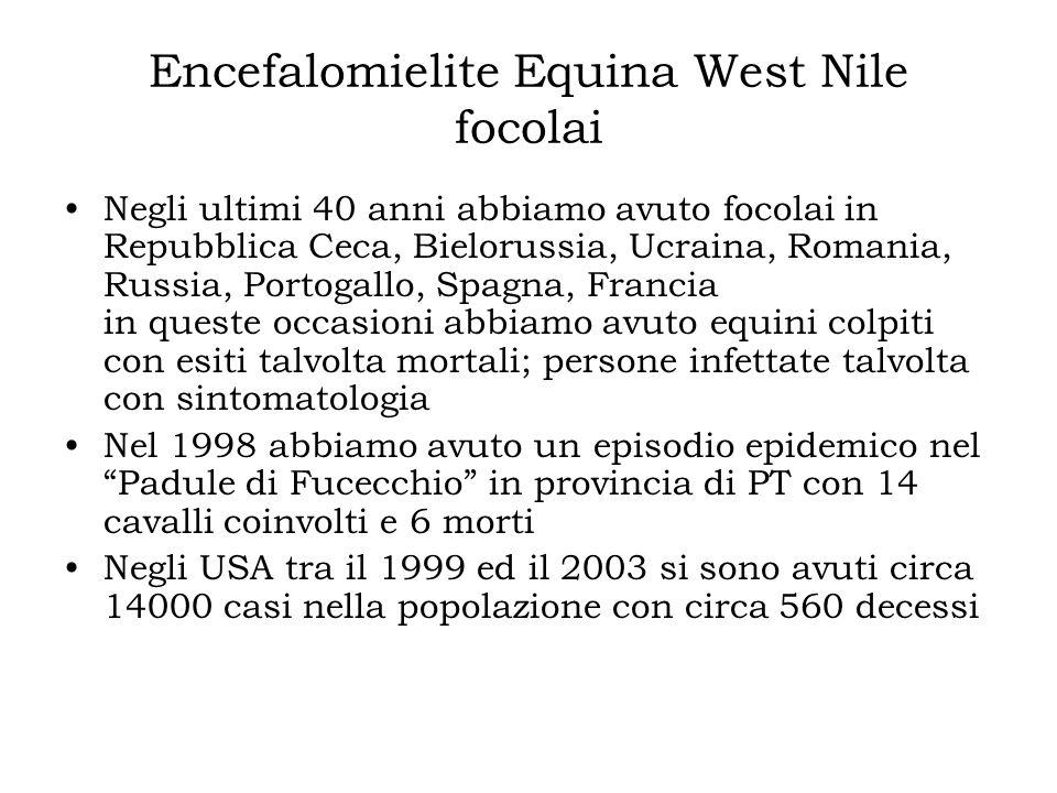 Encefalomielite Equina West Nile focolai