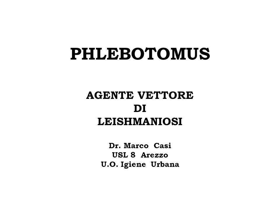PHLEBOTOMUS AGENTE VETTORE DI LEISHMANIOSI Dr. Marco Casi USL 8 Arezzo