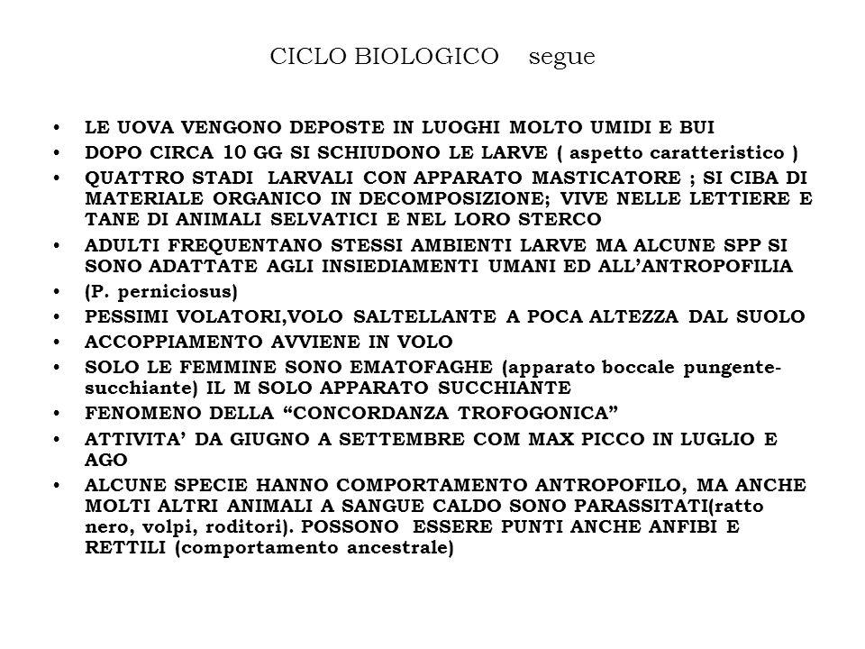 CICLO BIOLOGICO segue LE UOVA VENGONO DEPOSTE IN LUOGHI MOLTO UMIDI E BUI. DOPO CIRCA 10 GG SI SCHIUDONO LE LARVE ( aspetto caratteristico )