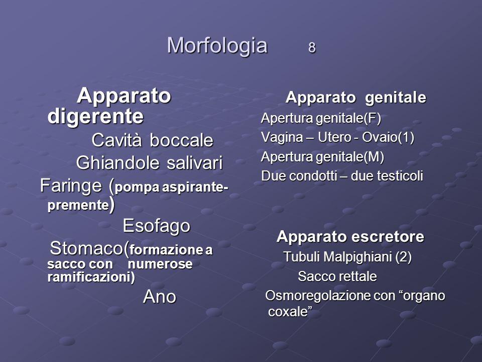 Morfologia 8 Apparato digerente Cavità boccale Ghiandole salivari