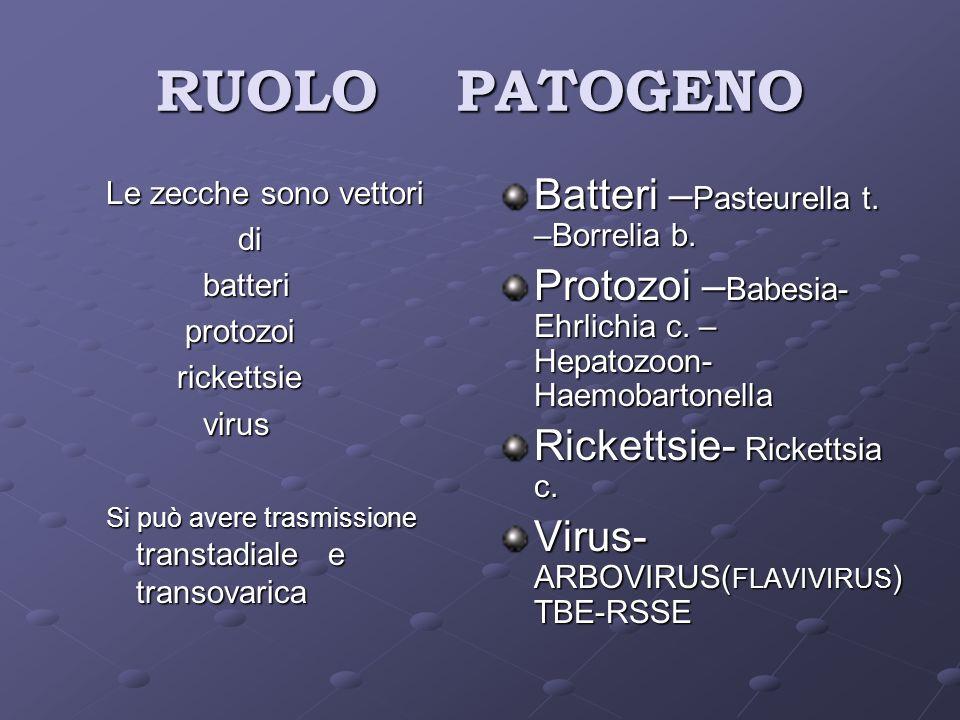 RUOLO PATOGENO Batteri –Pasteurella t. –Borrelia b.