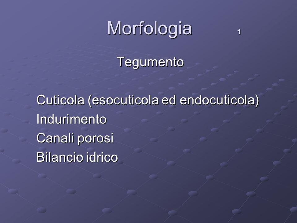 Morfologia 1 Tegumento Cuticola (esocuticola ed endocuticola)