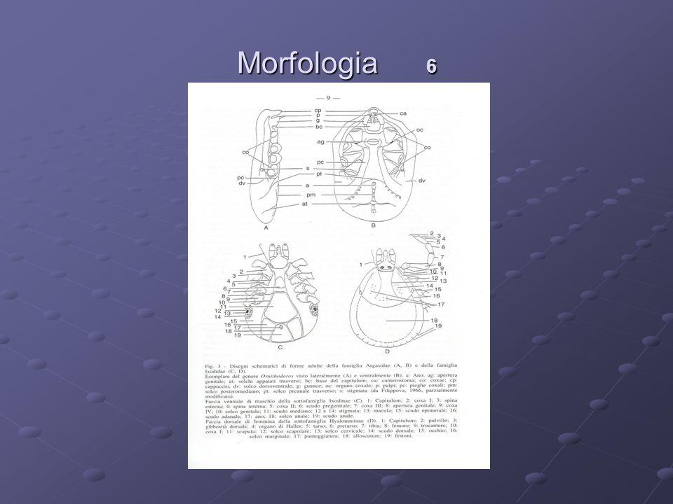 Morfologia 6