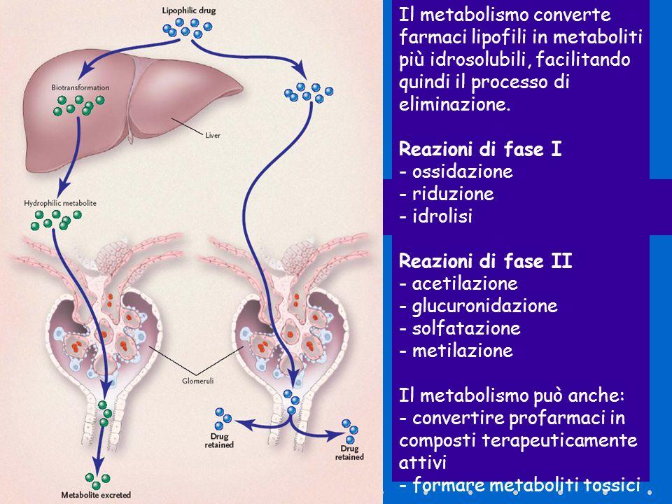 Il metabolismo converte farmaci lipofili in metaboliti più idrosolubili, facilitando quindi il processo di eliminazione.