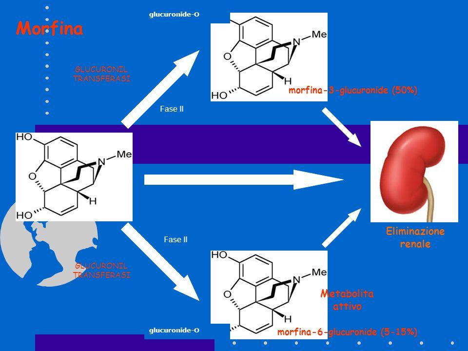 morfina-3-glucuronide (50%) morfina-6-glucuronide (5-15%)