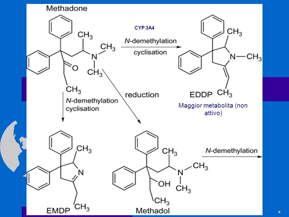 Maggior metabolita (non attivo)